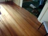Как правильно играть с котом в боулинг